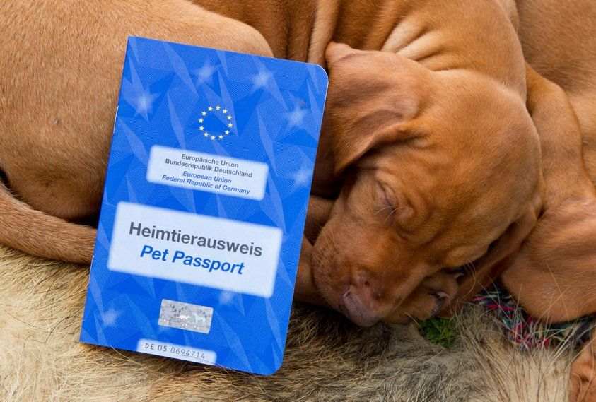 EU Heimtierausweis für reisende Hunde