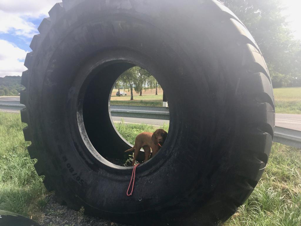 Nala hat sich beim Händler ebenfalls einen Reifen ausgesucht.