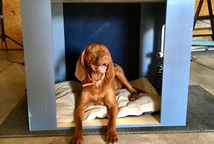 Nala bekommt eine neue Hundebox für den Kurzhauber