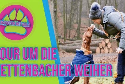 Wandern mit Nala - Tour um die Gettenbacher Weiher