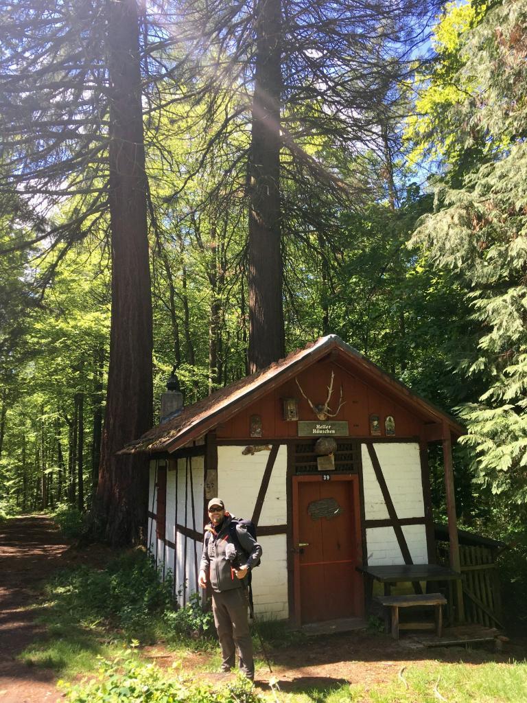Die kleine Forsthütte am Mammutbaum