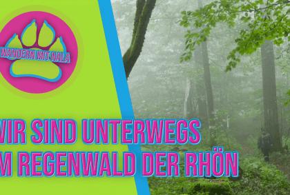 Wandern mit Nala - Im Regenwald der Rhön