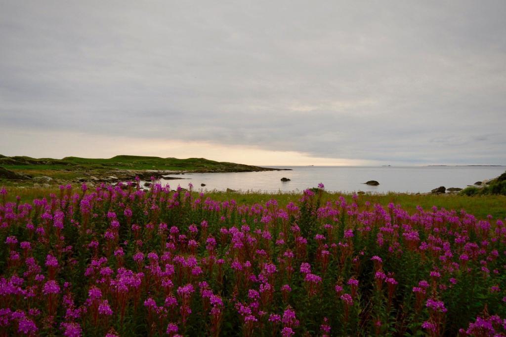 Feuermeer aus Pflanzen an der norwegischen Küste