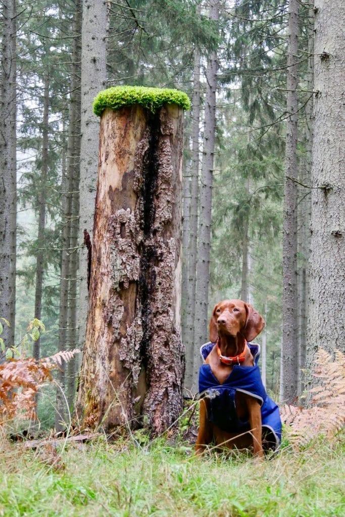 "Nala posiert neben einem ""Mooshütchenbaum"""