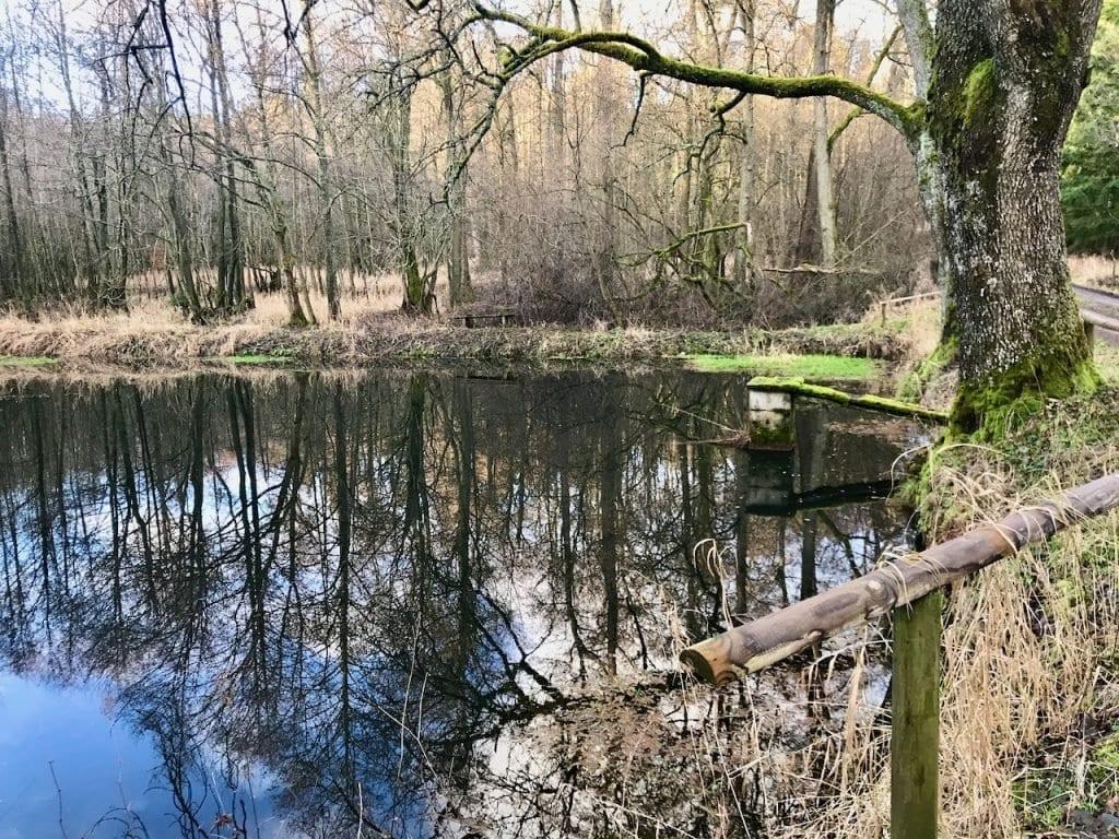 Bäume spiegeln sich im Ludwigsteich.