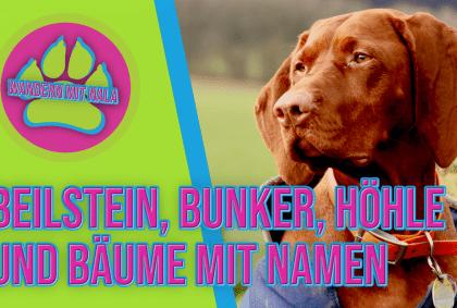 Beilstein ⛰️, Bunker, Höhle und Bäume 🌳 mit Namen – Lettgenbrunn – Spessart – Wandern mit Hund 🐕