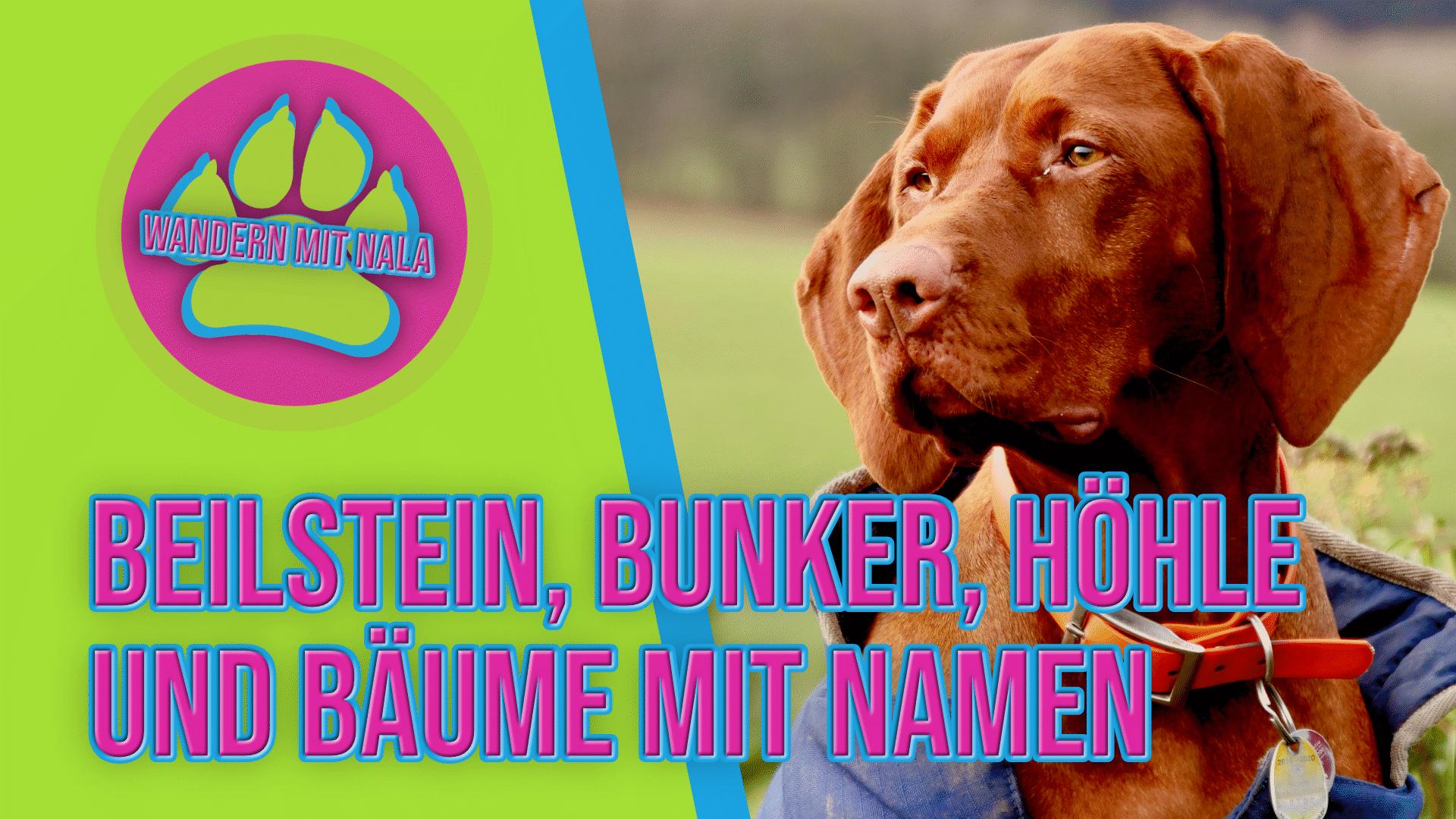 Wandern mit Nala - Beilstein - Lettgenbrunn - Wandern mit Hund