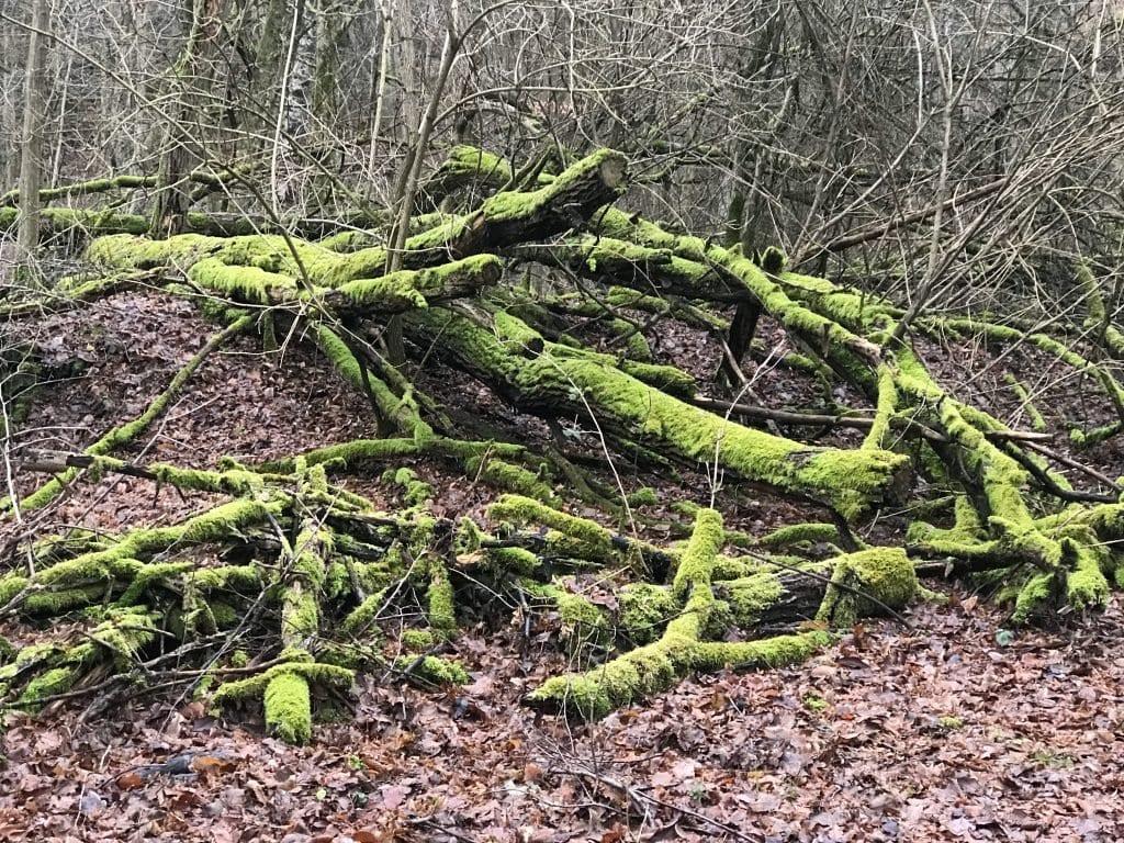 Moosbedeckte Bäume zieren unseren Wanderweg