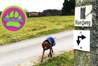Die 4 Türme - Wandern mit Hund