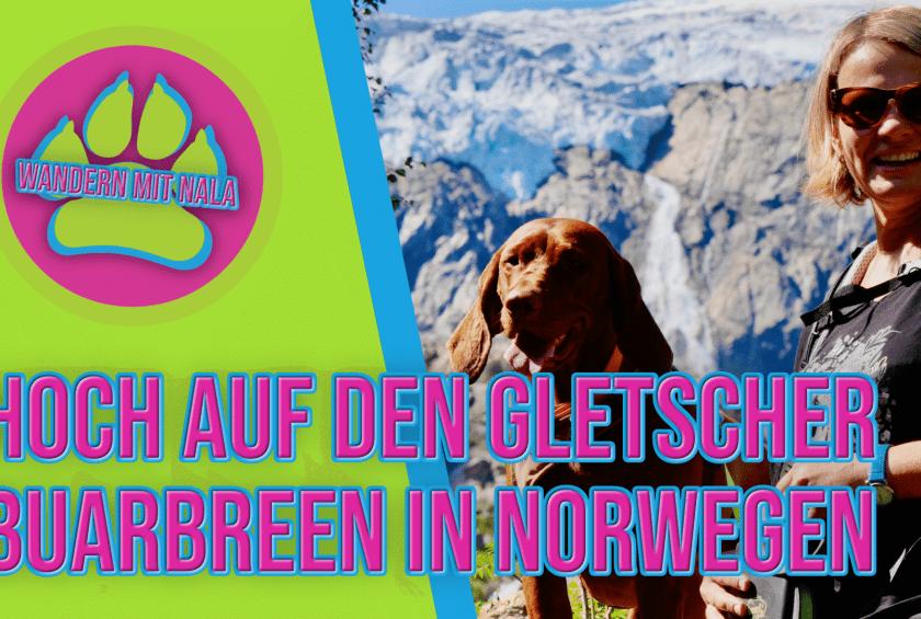 Hoch zum Gletscher 🏔️ – Buarbreen – Norwegen 🇳🇴 – Wandern mit Hund 🐕