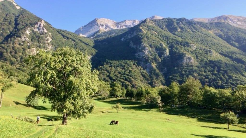Die ersten Schritte auf unserer Tour führen über eine traumhafte Bergwiese