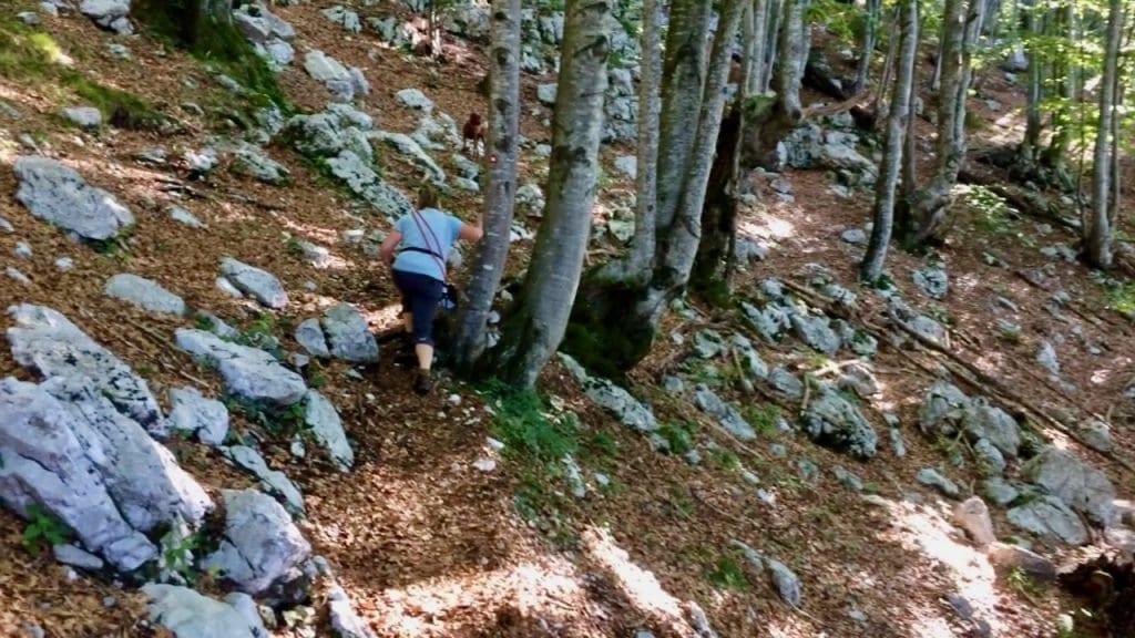 Der Weg führt uns durch lichte Wälder, deren Böden immer wieder von kleinen Felsen gespickt sind.