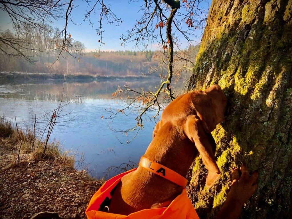 Ein Leckerli in der Baumrinde. Einer Hundenase entgeht nichts.