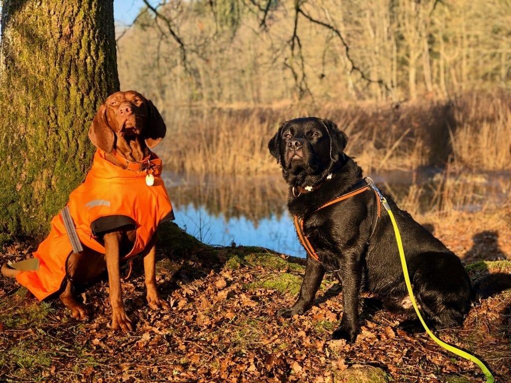 Jagdhunde in ihrem natürlichen Lebensraum ;)