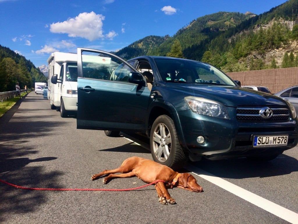 Keine Sorge. Nala ist nichts passiert. Sie schläft auf dem warmen Asphalt der Autobahn während der Vollsperrung am Tauerntunnel