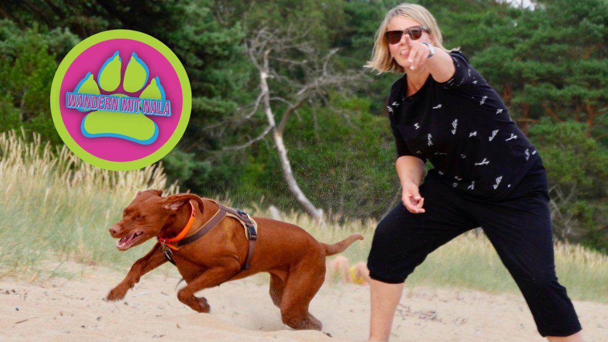 Wie du deinen Hund richtig beschäftigen kannst