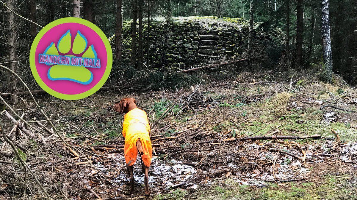 Die Hungerpyramide im Büdinger Wald - Spessart - Wandern mit Hund