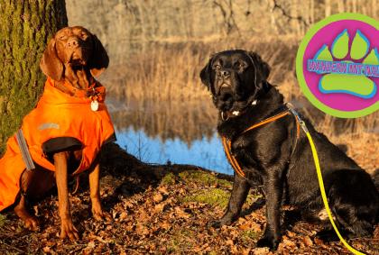 Im Wald der Weiher - Wandern mit Hund