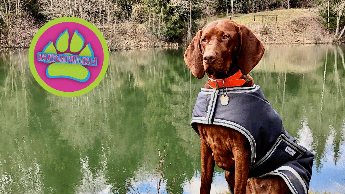 Wanderung mit Hund zum Basaltsee in der Rhön