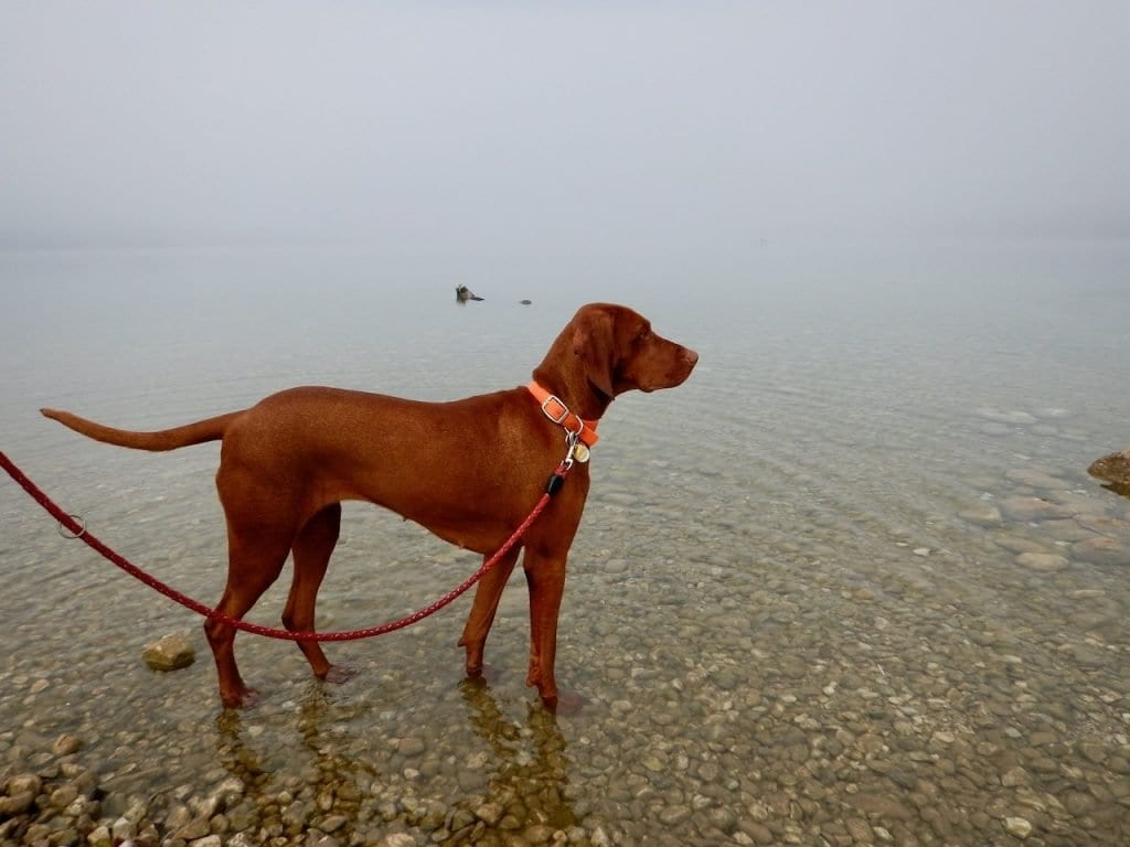 Ruhig liegt der See im Nebel. Das Flache Ufer ist für Hunde ideal zum spielen.