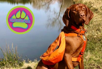 Hunderucksack Erfahrungsbericht: Ruffwear Approach 🎒 – Wandern mit Hund 🐕