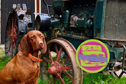 Gamla Linköping – Das alte Schweden 🇸🇪 – Freiheitstour 2020 – Roadtrip mit Hund 🐕 [Video]