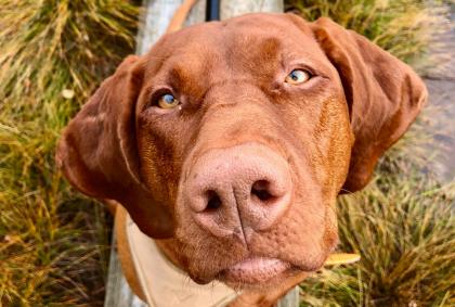 Wandern mit Hund im Store Mosse Nationalpark