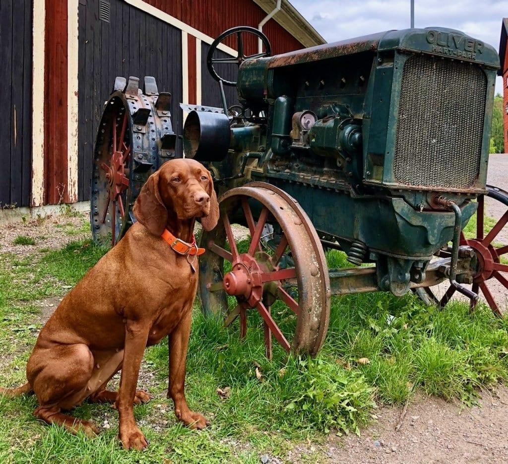 Nala und der alte Oliver Hart-Parr Trecker mit Rädern aus Eisen